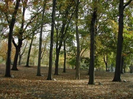 307th Memorial, Central Park